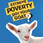 goat copy